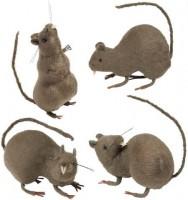Ratte mit Haaren