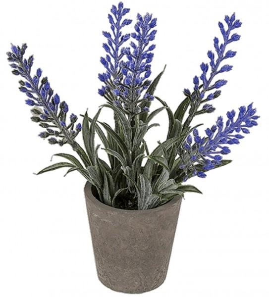 Lavendel Im Topf Party Deko