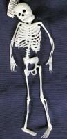 PVC Skelett