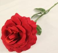 24 rote Rosen