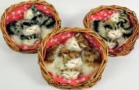3 Fell-Katzen im Korb